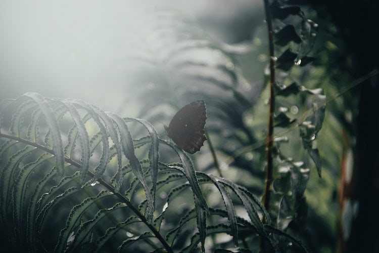 Butterfly Forest | ButterflyPages.com