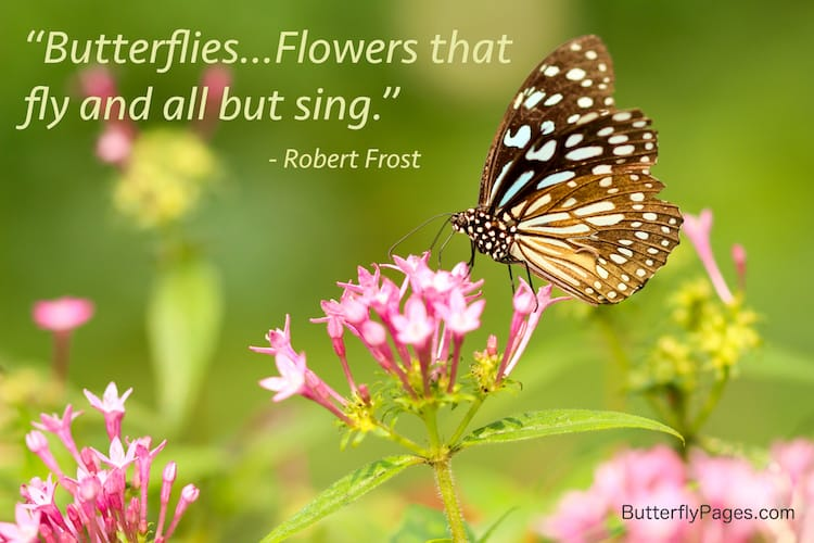 Robert Frost Butterfly Quote | ButterflyPages.com