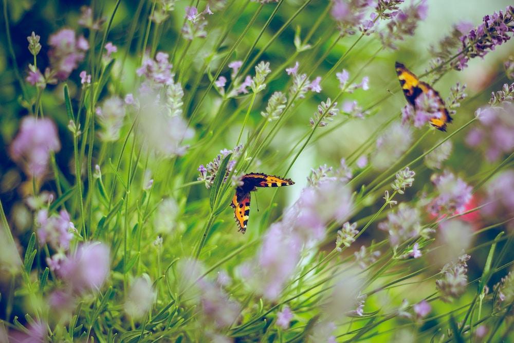 Butterfly Garden | ButterflyPages.com